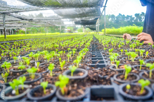 Seeds Of Fast Growing Tree Species In The Nursery Forest