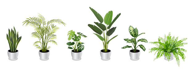Set of Tropical Houseplants in White Pots