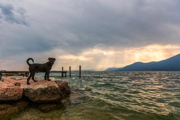 Black dog on shore of the like