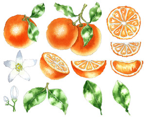 Watercolor orange fruit, slice, leaf, bud, flower illustration perfectly isolated on a white background. Hand painted orange set for pattern, banner, border, frame, texture