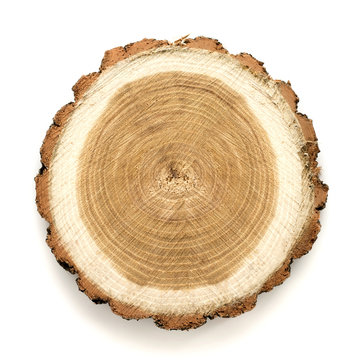 Acacia tree cut isolated on white background. Large circular piece of wood cross section with tree ring texture pattern and cracks