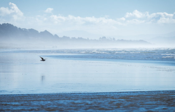 Seagull flying over a blue beach in Northern California
