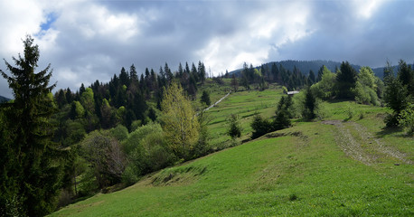 The alpine ridges of the Carpathian Mountains are surrounded by centuries-old forests on the background of the blue sky with white clouds