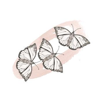 Butterflymood 1