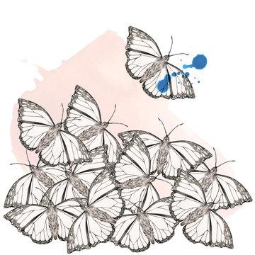 Butterflymood 2