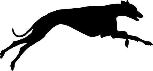Greyhound 9 isolated vector silhouette