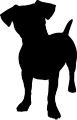 Jack Russell Terrier 4 isolated vector silhouette