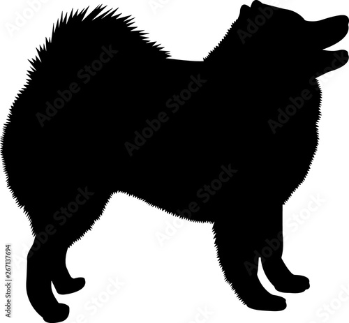 Samoyed 10 isolated vector silhouette