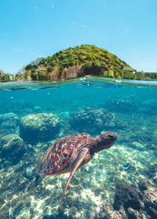 Photo sur Plexiglas Tortue Swimming turtle in blue sea water on background green hill and coral reef waterline view. Beautiful sea turtle swimming underwater. Apo Island, Philippines.
