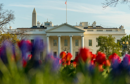 Colorful flowers at White house in Washington DC, beautiful spring season
