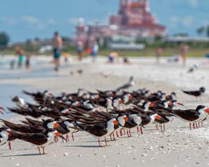Birds enjoying the surf