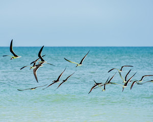 Birds scattering above the surf