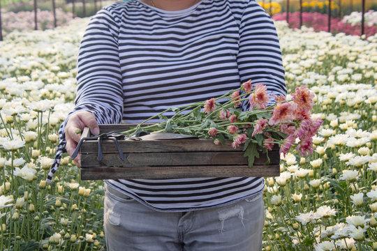 Female farmer in the flower garden