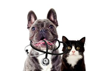 Veterinarian dog and stethoscope