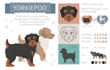 Search photos yorkie-poo