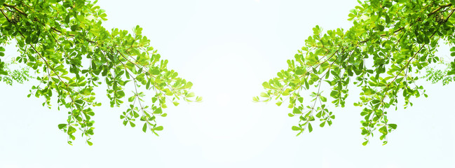 Earth Day concept: green leaves and branches on white background for abstract texture environment nature Wall mural