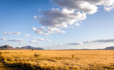 Savannah plains landscape in Kenya