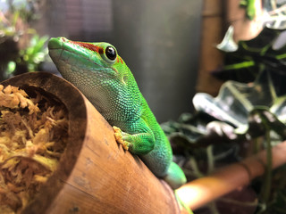 Green Lizard on a Tree