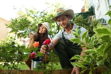 Happy couple growing rose in the garden