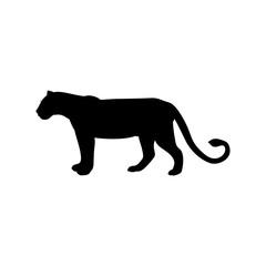 Lioness predator black silhouette animal. Vector Illustrator.