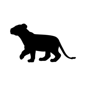 Lion cub predator black silhouette animal. Vector Illustrator.