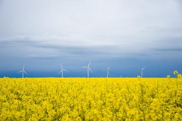 Energie und Strom aus Windrädern, Windrad in der natur