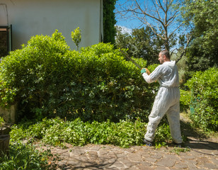 man trimming an hedge