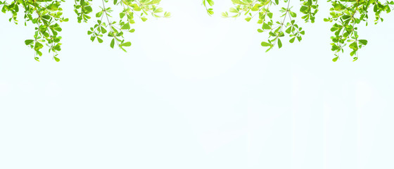 Earth Day concept: green leaves and branches on white background for abstract texture environment nature