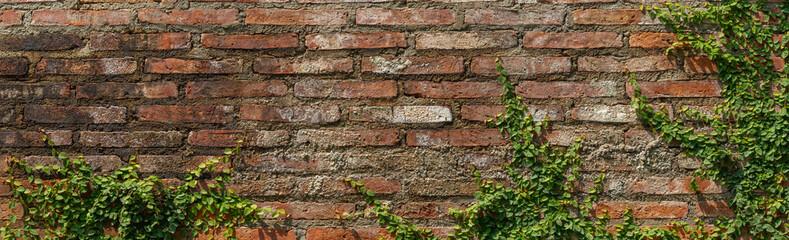 Vine on wall brick background texture red old vintage grunge
