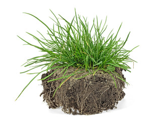 Fototapeta Green grass, soil and grass isolated on white background. obraz