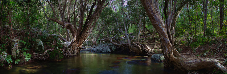 A wonderful tropical creek runs between mysterious curved trees and boulders. Davies Creek National Park , Upper Davies Creek and Dinden National Park. Far North Queensland, Australia. Image. Wall mural
