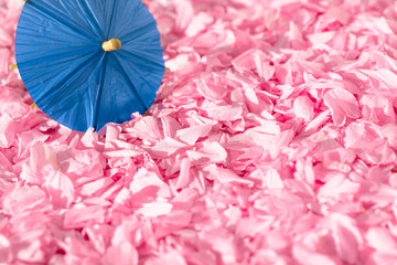 Japanese Spring Pink Petal Scene / Background carpet of cherry blossom petals with asian miniature umbrella made of paper (copy space)