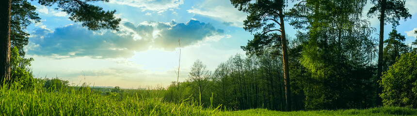panoramic view forest and blue sky