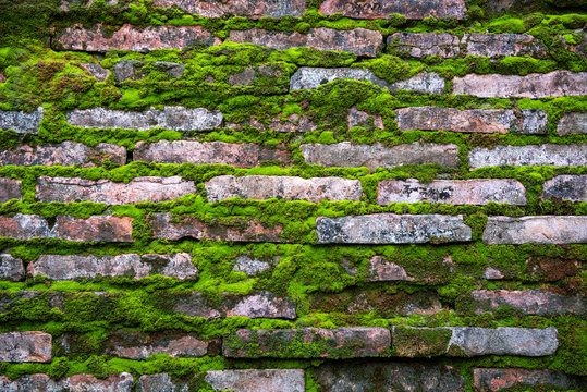 pattern of  bricks with old green rustic moss grass