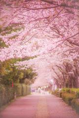 Poster Trees 調布飛行場の桜