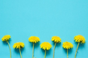 Flowers composition. Yellow flowers of dandelions on white background. Top wiev. - Image