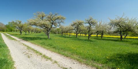 Obstbäume Ahldorf