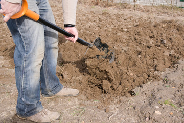 Fototapeta Mężczyzna pracujący łopatą. Ogród działkowy. obraz