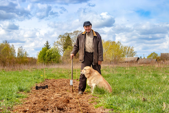 Farming, gardening, agriculture and people concept. Old man planting potatoes at garden or farm.