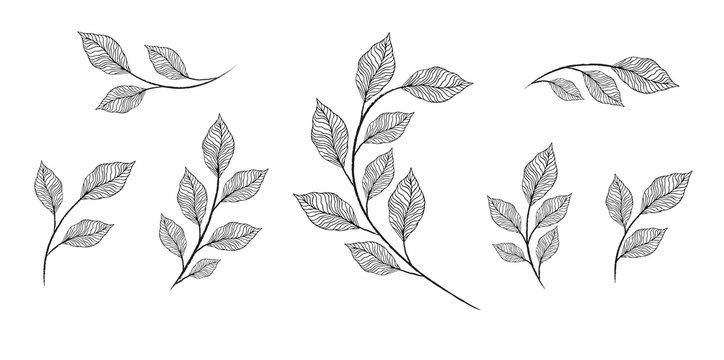 designer elements set collection of greeng leaves herbs