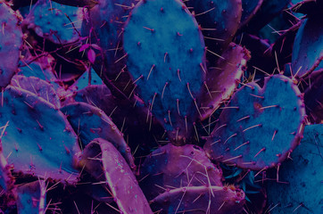 cacti in the tropics. neon. pink and blue color. Hot summer