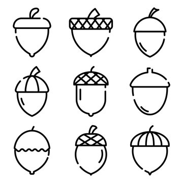 Acorn icons set. Outline set of acorn vector icons for web design isolated on white background