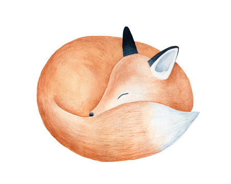 Cute fluffy sleeping fox character watercolor illustration. Symbol of cleverness, intelligence, charm, beauty, protection. Handdrawn water color graphic drawing, cutout element for design decoration.