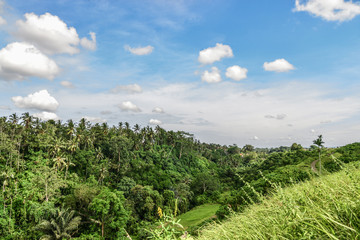 Campuhan Ridge Walk just outside of Ubud, Bali, Indonesia.