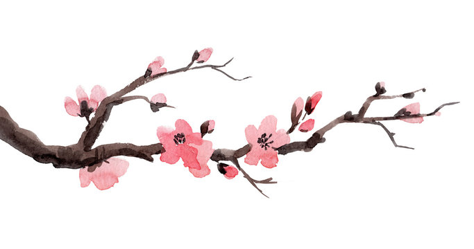 Watercolor sakura branch