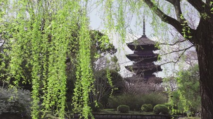 Fototapete - Pagoda and green leaves in spring, Japan.