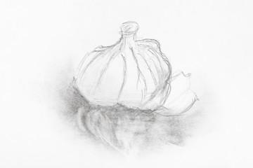 sketch of head of garlic hand drawn by pencil