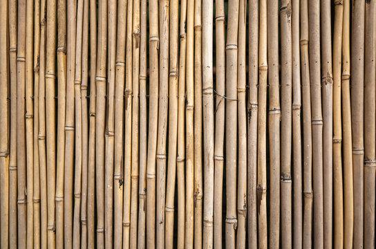 yellow bamboo wall background