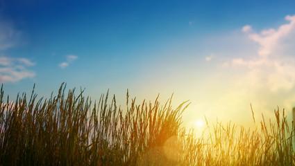 Green grass On summer Field - Abstract sunset Landscape