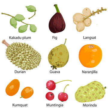9 different fruits on a white background